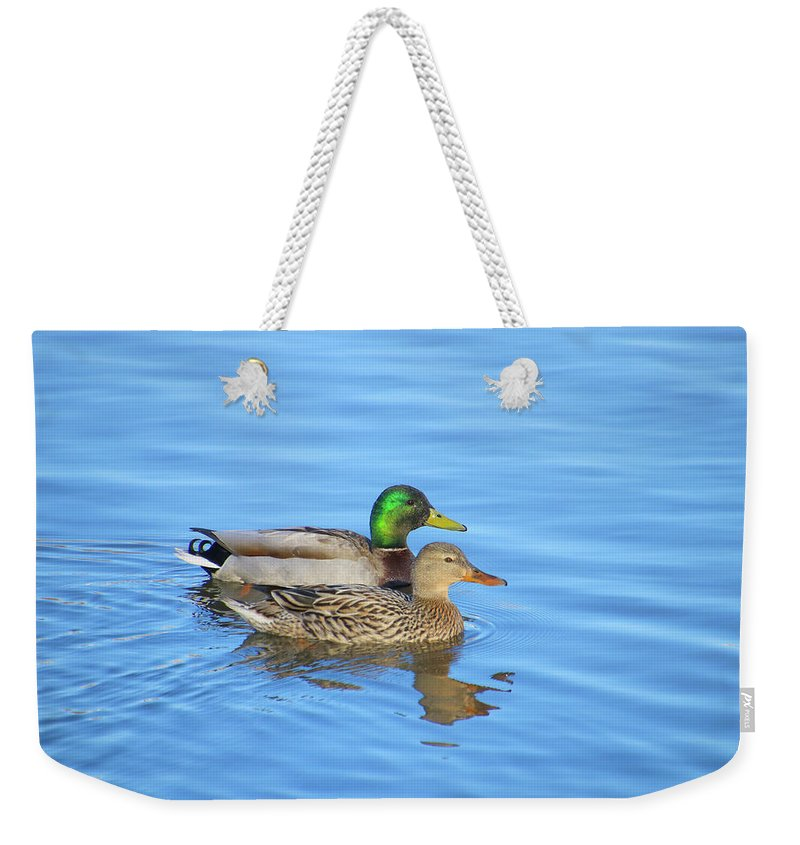 A Nice Nice Mallard Couple On An Afternoon Stroll Weekender Tote Bag featuring the photograph Mallard Couple by Tony Umana