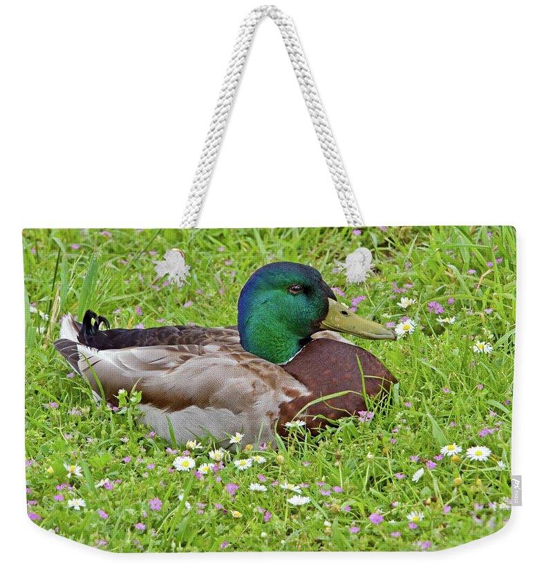 Mallard Drake Weekender Tote Bag featuring the photograph Mallard Drake In The Grass by Randall Ingalls