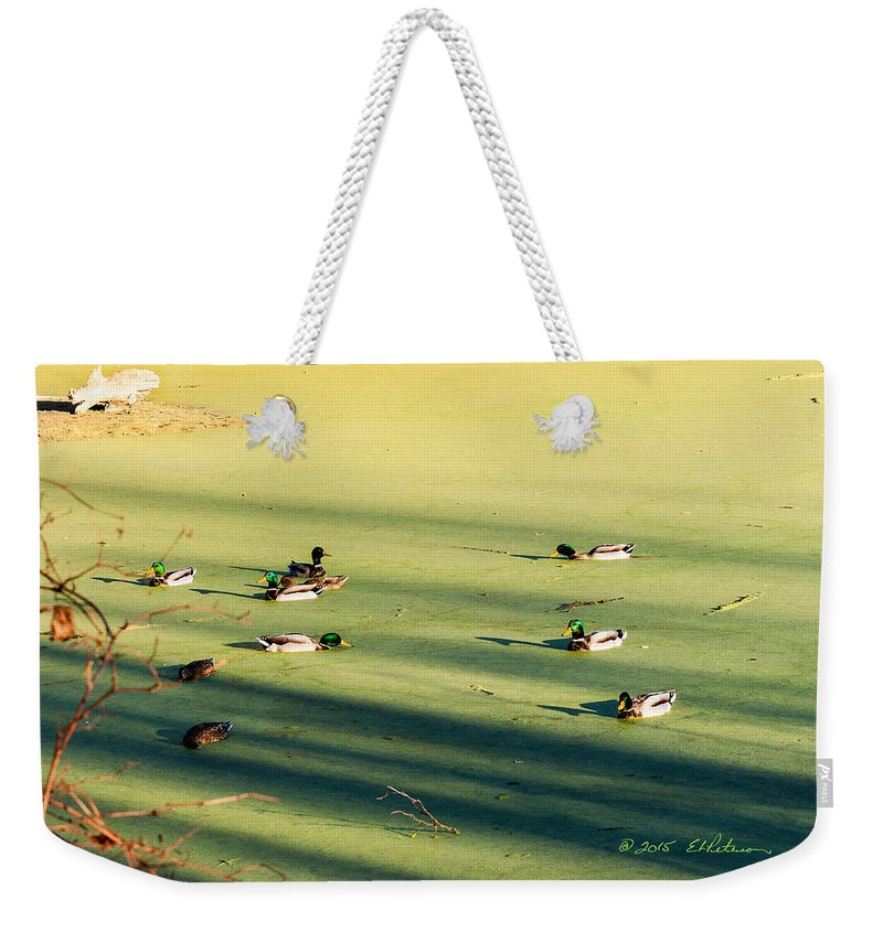 Fall Weekender Tote Bag featuring the photograph Mallard Drakes by Edward Peterson