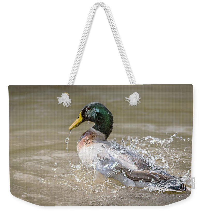Mallard Weekender Tote Bag featuring the photograph Mallard Duck Bathing Time In Dam by Ronel Broderick