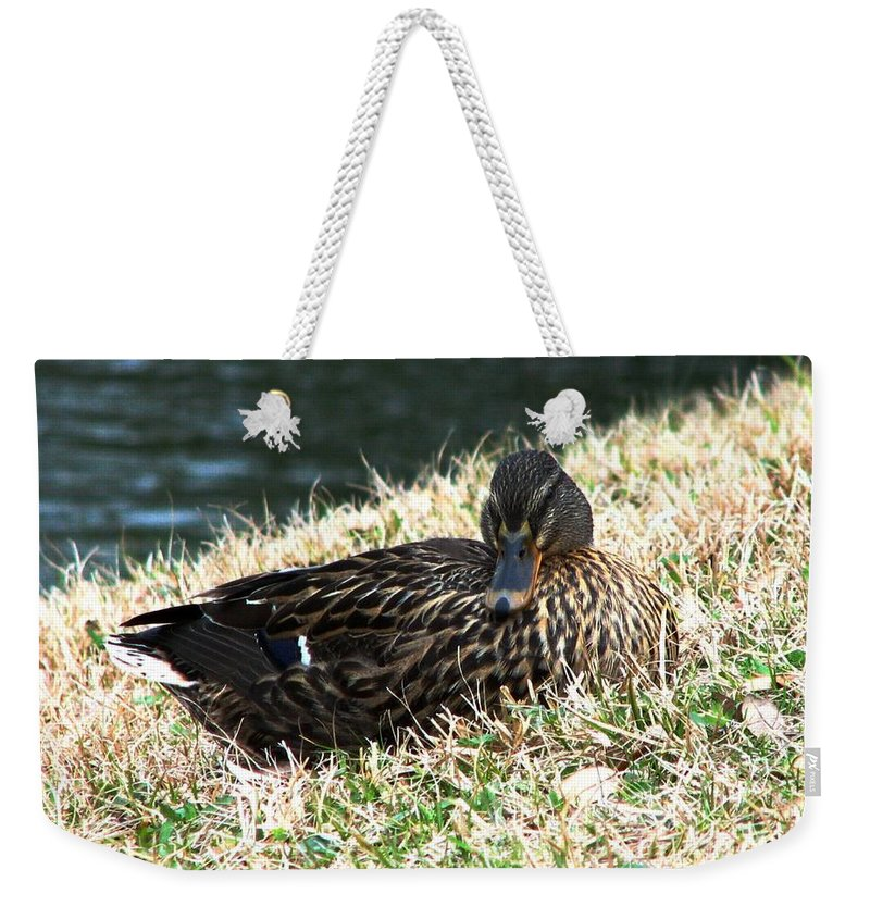 Duck Weekender Tote Bag featuring the photograph Mallard Female 1 by J M Farris Photography