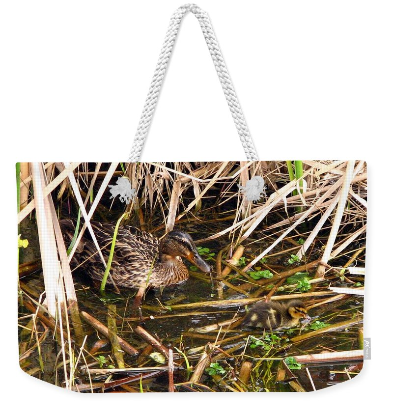 Duck Weekender Tote Bag featuring the photograph Mallard Mama With Duckling by J M Farris Photography