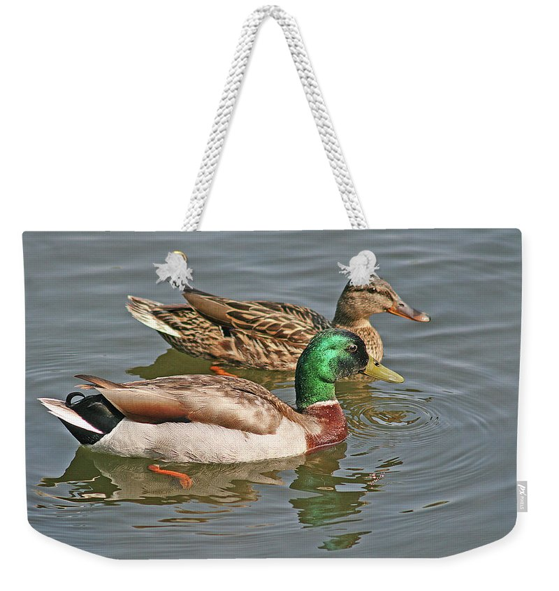 Pair Of Mallards Swimming Weekender Tote Bag featuring the photograph Mallard Pair Swimming, Waterfowl, Ducks by Mick Flodin