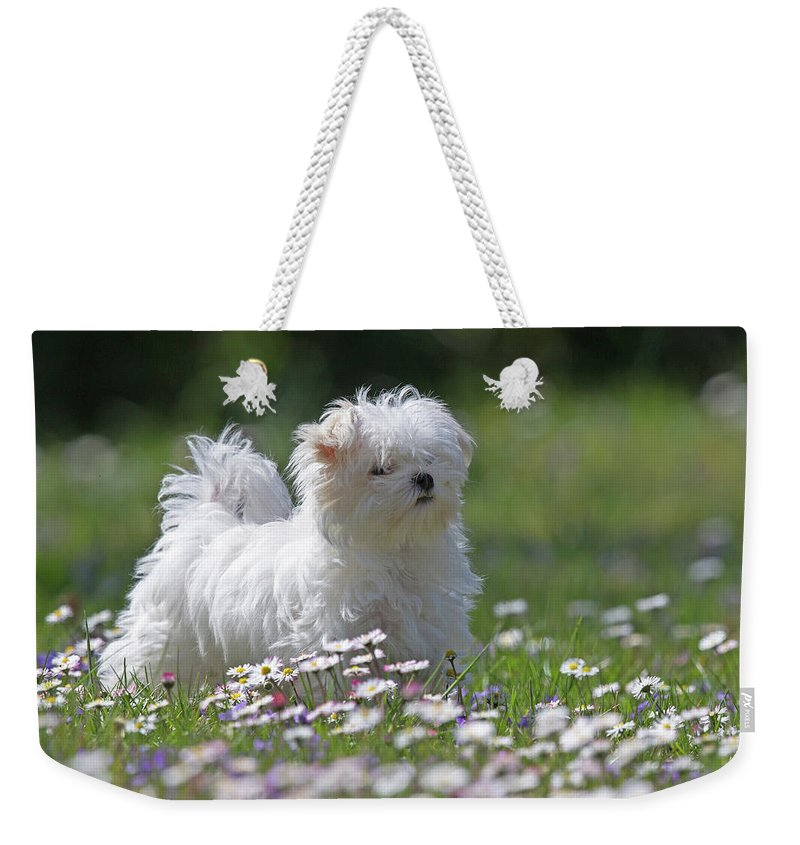 Maltese Weekender Tote Bag featuring the photograph Maltese by Jean-Luc Baron