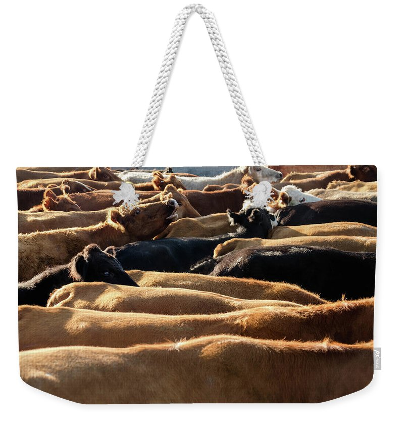 Cows Weekender Tote Bag featuring the photograph Mamas by Andra Erickson
