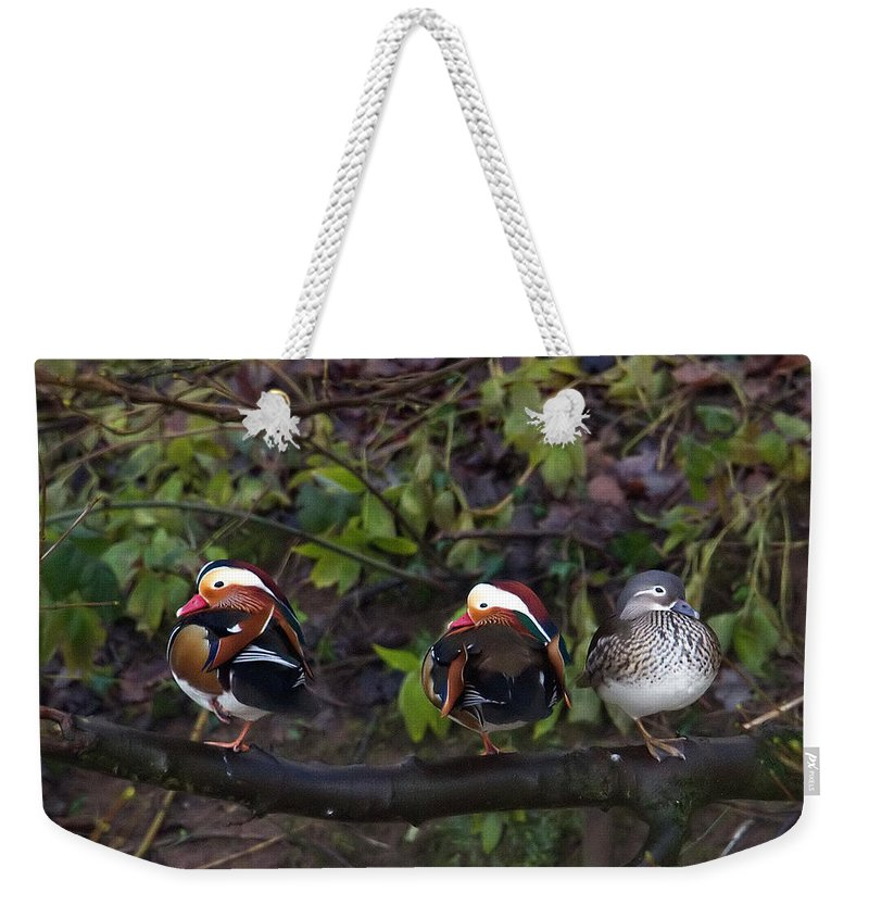 Mandarin Ducks Weekender Tote Bag featuring the photograph Mandarin Ducks by Bob Kemp