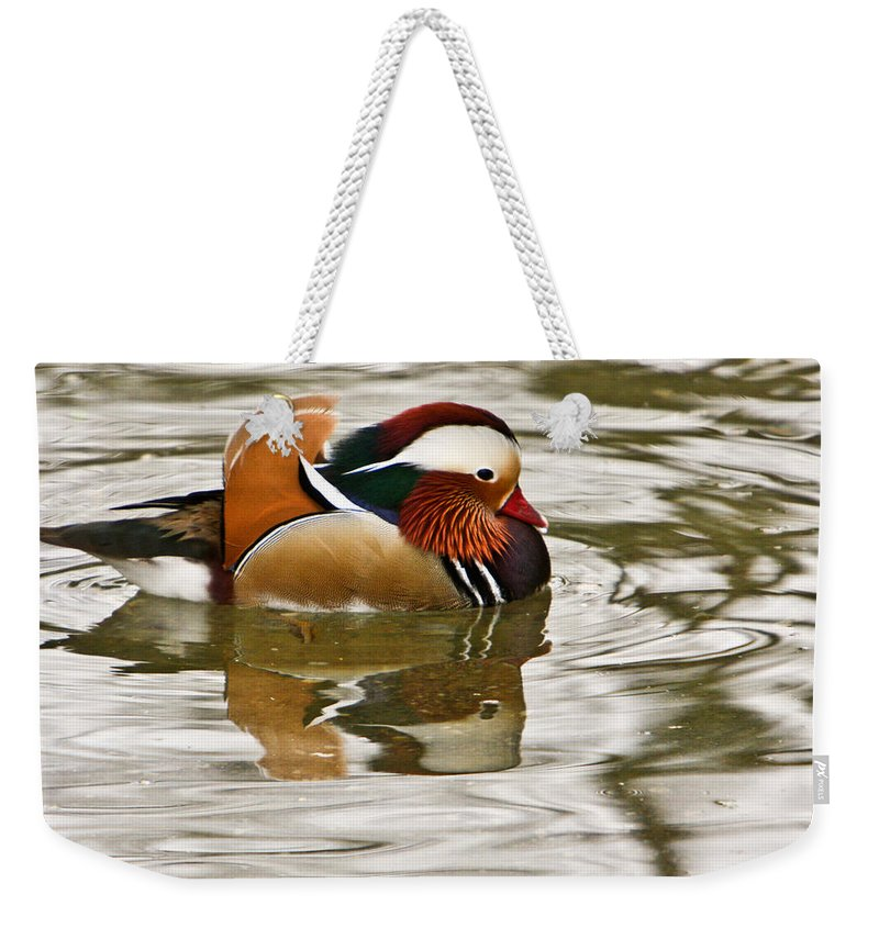 Mandrin Duck Swimming Weekender Tote Bag featuring the photograph Mandrin Duck Going For A Swim by Douglas Barnett
