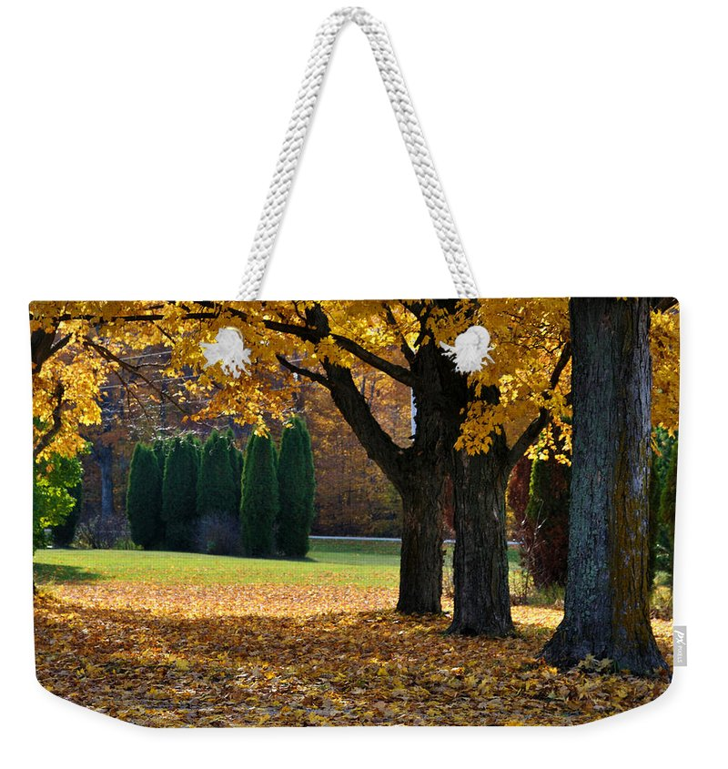 Trees Weekender Tote Bag featuring the photograph Maple And Arborvitae by Tim Nyberg
