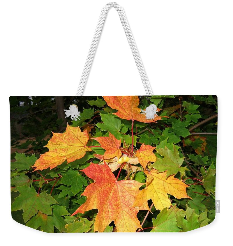 Maple Leaves Weekender Tote Bag featuring the photograph Maple Mania 10 by Will Borden