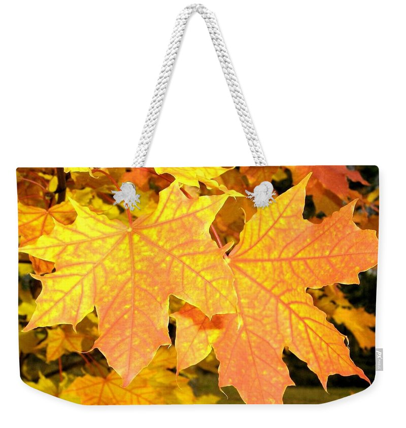 Autumn Weekender Tote Bag featuring the photograph Maple Mania 2 by Will Borden