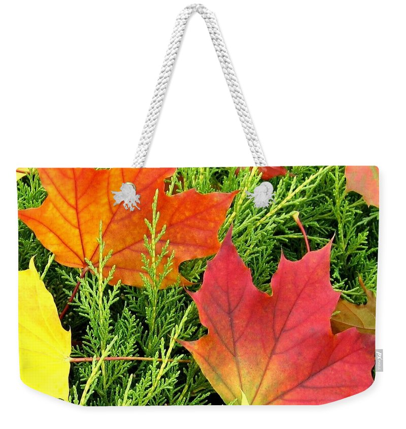 Autumn Weekender Tote Bag featuring the photograph Maple Mania 5 by Will Borden