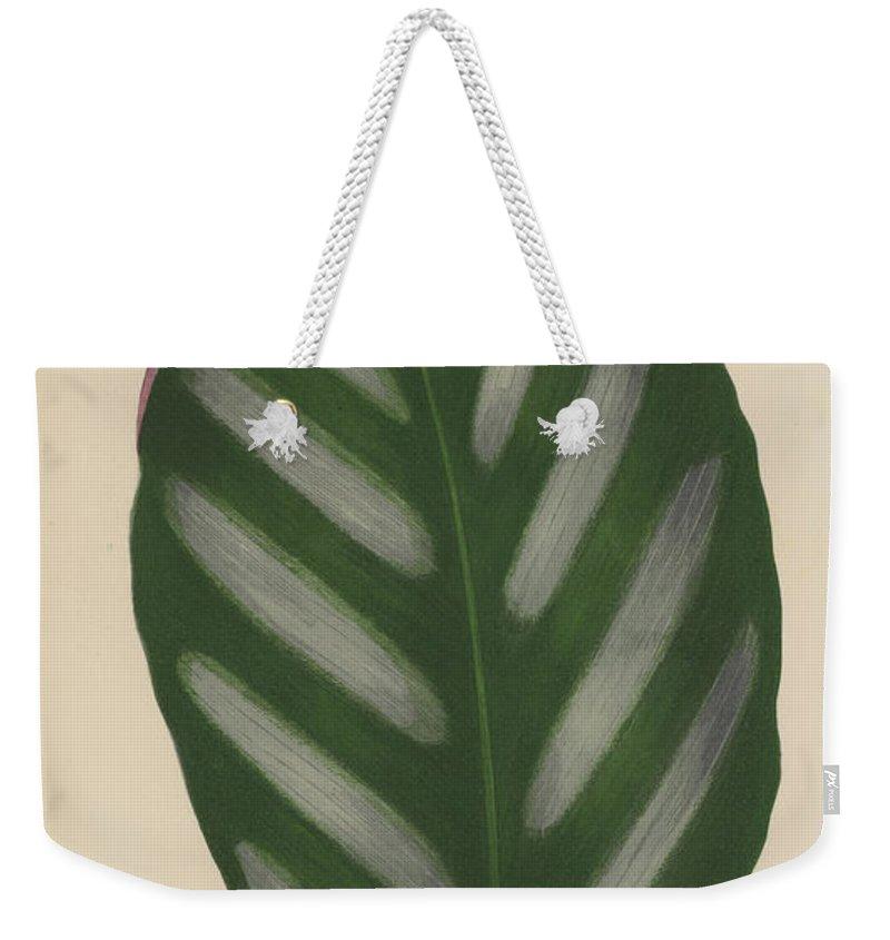 Maranta Porteana Weekender Tote Bag featuring the painting Maranta Porteana by English School
