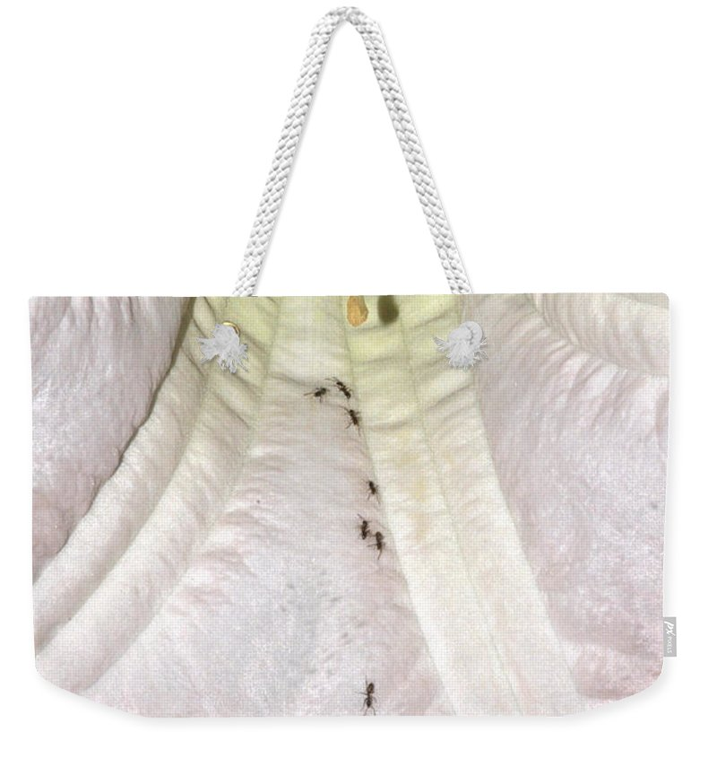 Clay Weekender Tote Bag featuring the photograph Marching Ants by Clayton Bruster