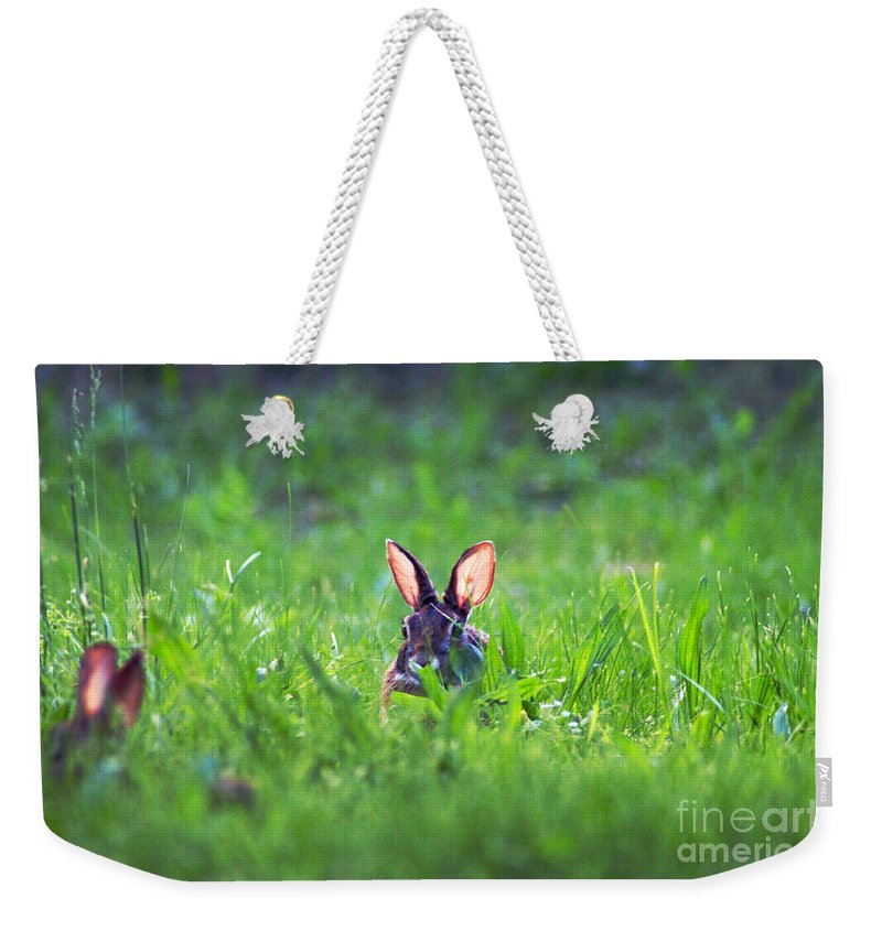 Clay Weekender Tote Bag featuring the photograph Marco - Polo by Clayton Bruster