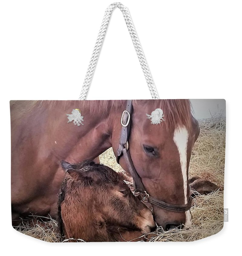 Horses Weekender Tote Bag featuring the photograph Mare and Foal by Kristen Wesch