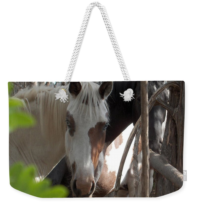 Horses Herd Mares Trees Ranch Farm Acreage Weekender Tote Bag featuring the photograph Mares In Trees by Andrea Lawrence