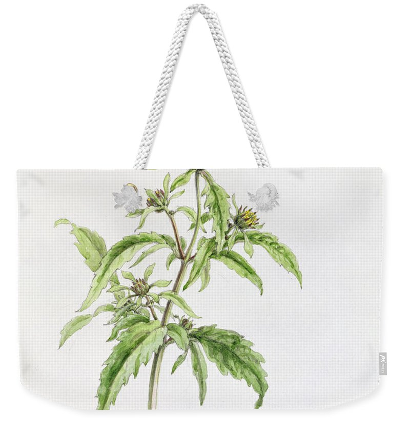 Botanical Drawing; Botany; Yellow Flowers; Flower; Plant Weekender Tote Bag featuring the painting Marigold by WJ Linton