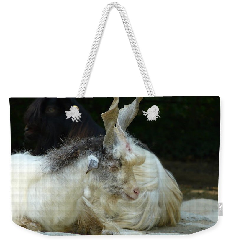 Goat Weekender Tote Bag featuring the photograph Markhor by Valerie Ornstein