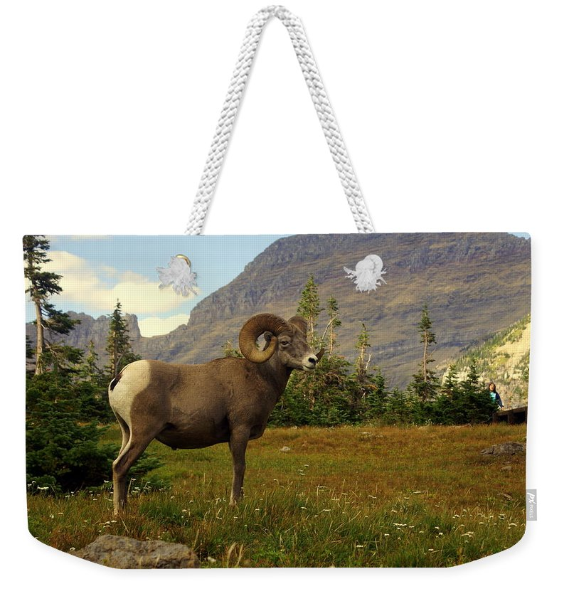 Big Horn Sheep Weekender Tote Bag featuring the photograph Master Of His Domain by Marty Koch