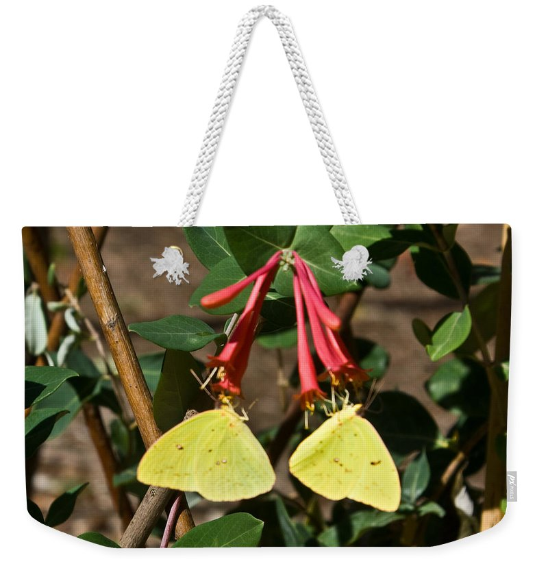 Sulfur Weekender Tote Bag featuring the photograph Matched Pair Of Sulfur Butterflies by Douglas Barnett