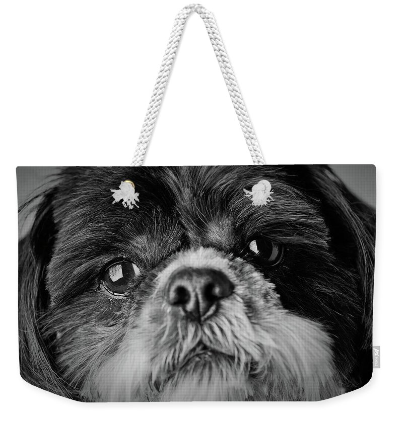 Shih Tzu Dog Weekender Tote Bag featuring the photograph Max - A Shih Tzu Portrait by Onyonet Photo Studios