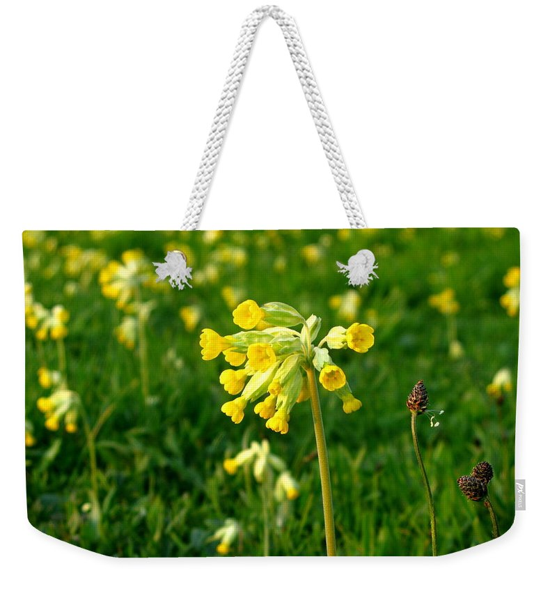Cowslips Weekender Tote Bag featuring the photograph Meadow At Sunset by Maria Joy