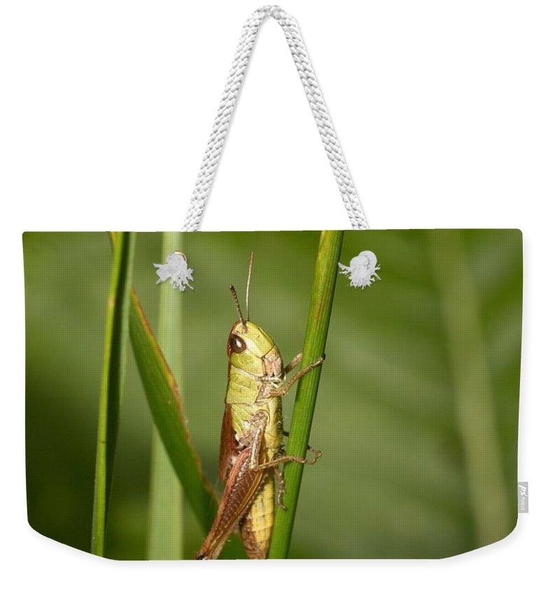 Lehtokukka Weekender Tote Bag featuring the photograph Meadow Grasshopper by Jouko Lehto