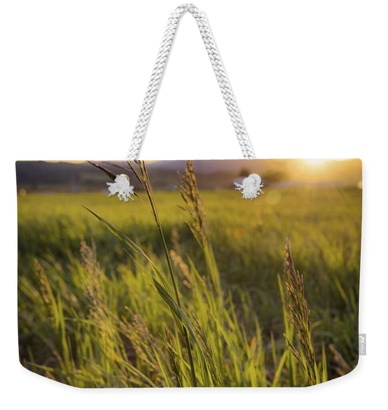 Meadow Light Weekender Tote Bag featuring the photograph Meadow Light by Chad Dutson