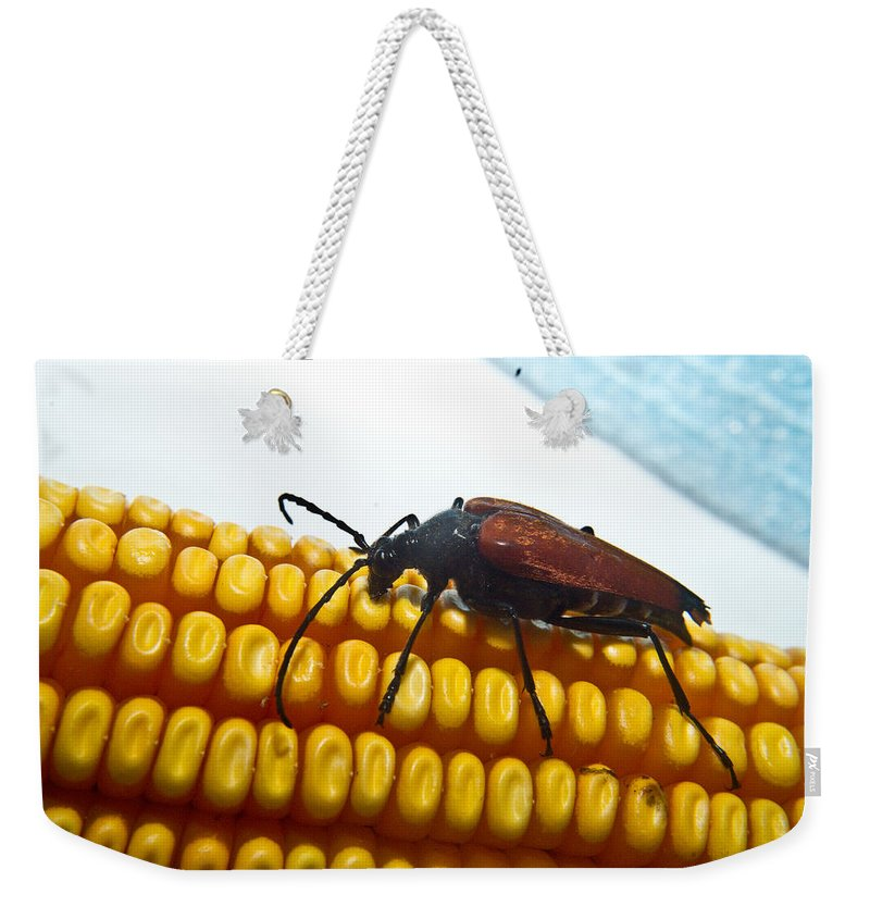 Corn Weekender Tote Bag featuring the photograph Meal Time by Douglas Barnett