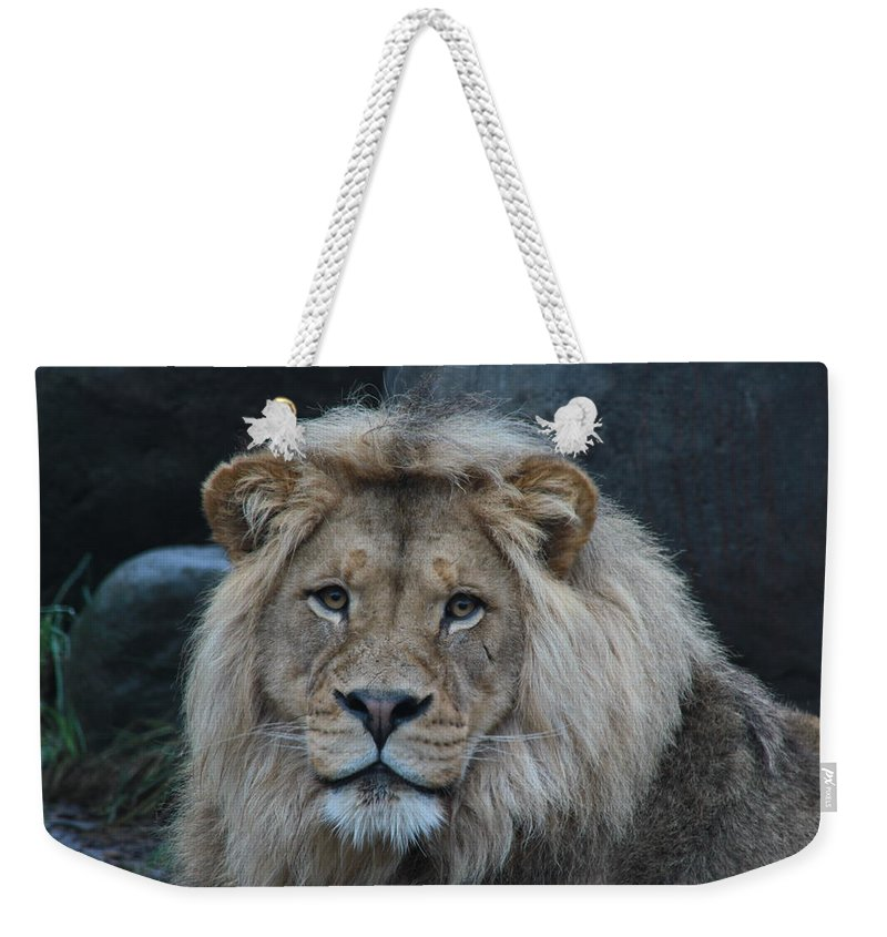 Lion Weekender Tote Bag featuring the photograph Meal Time by Laddie Halupa