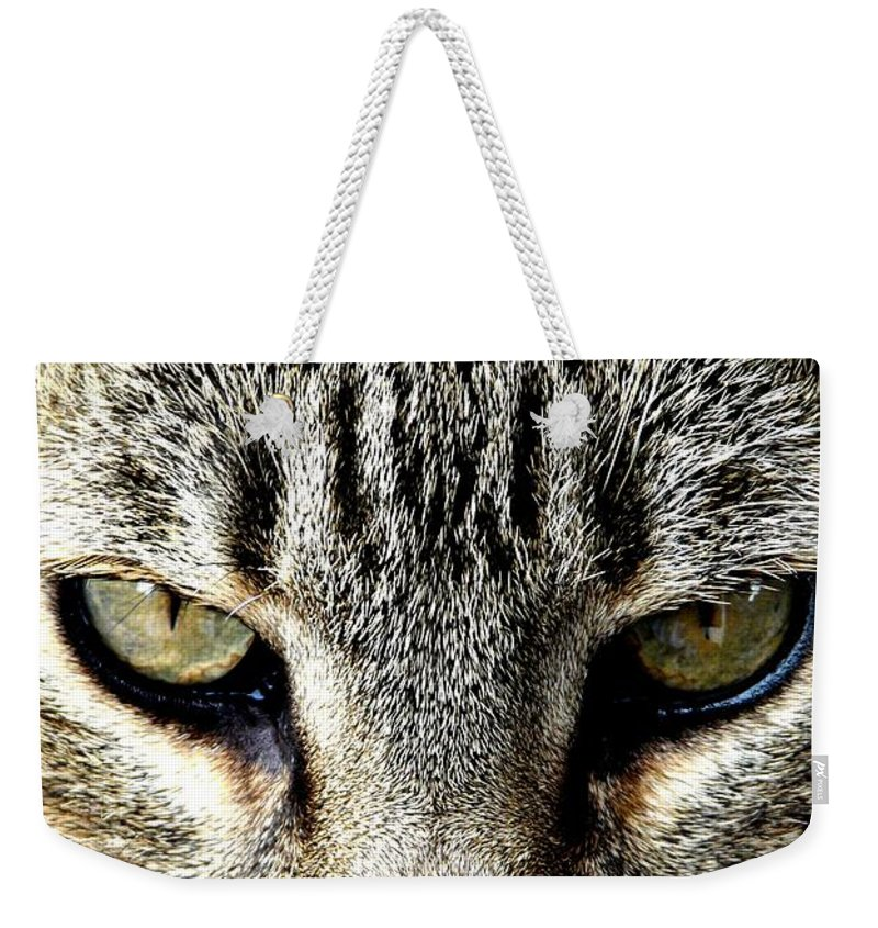 Cat Weekender Tote Bag featuring the photograph Me...dangerous...never. by Valerie Ornstein
