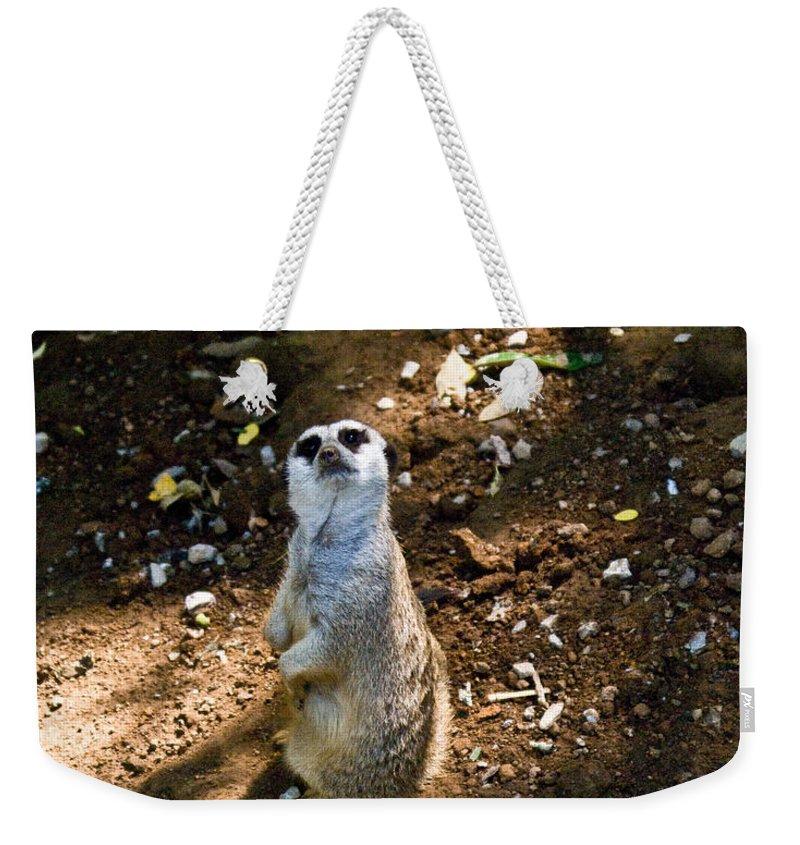 Meerkat Weekender Tote Bag featuring the photograph Meerkat   Say What by Douglas Barnett