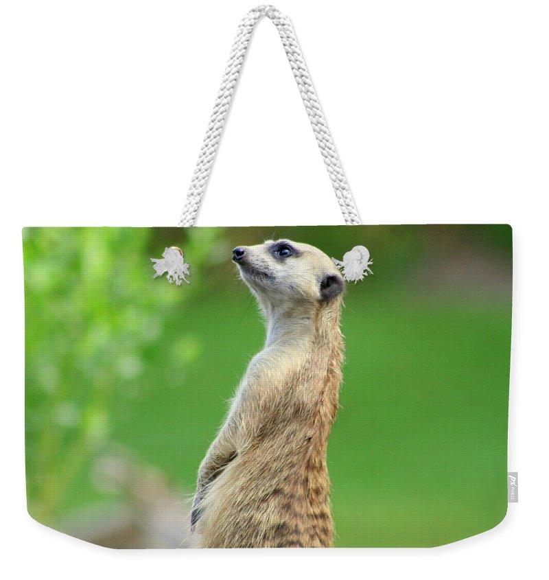 Meerkat Weekender Tote Bag featuring the photograph Meerkat by Anita Hiltz