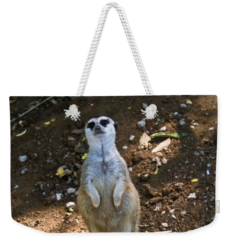 Meerkat Weekender Tote Bag featuring the photograph Meerkat Poising by Douglas Barnett