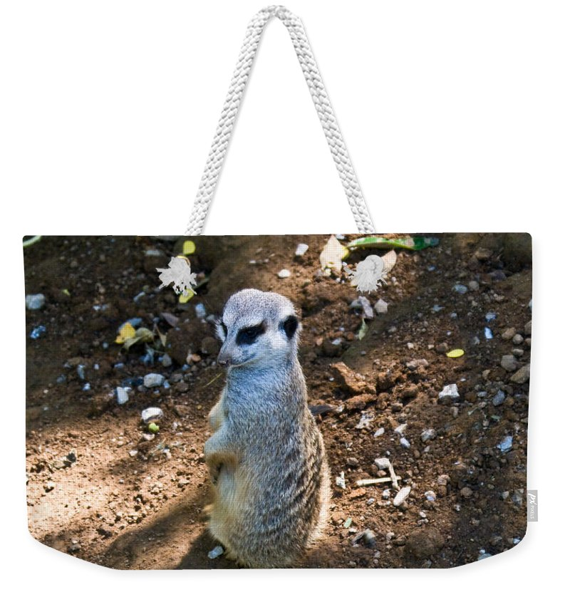 Weekender Tote Bag featuring the photograph Meerkat Responding by Douglas Barnett