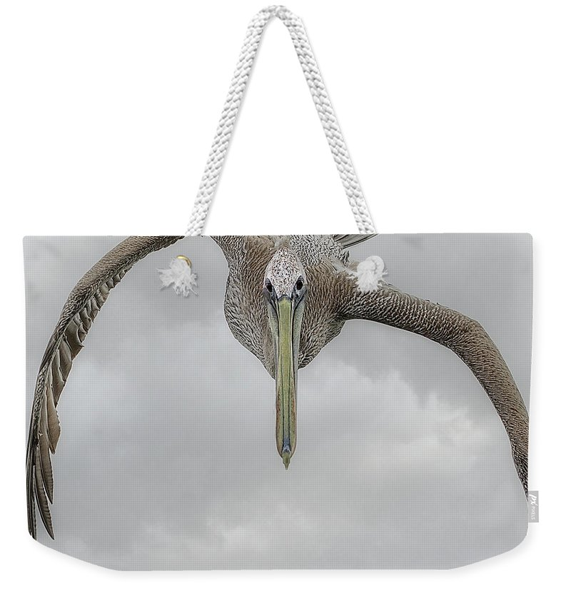 Bird Weekender Tote Bag featuring the photograph Meet And Greet by Leslie Reagan - Joy To The Wild Photos