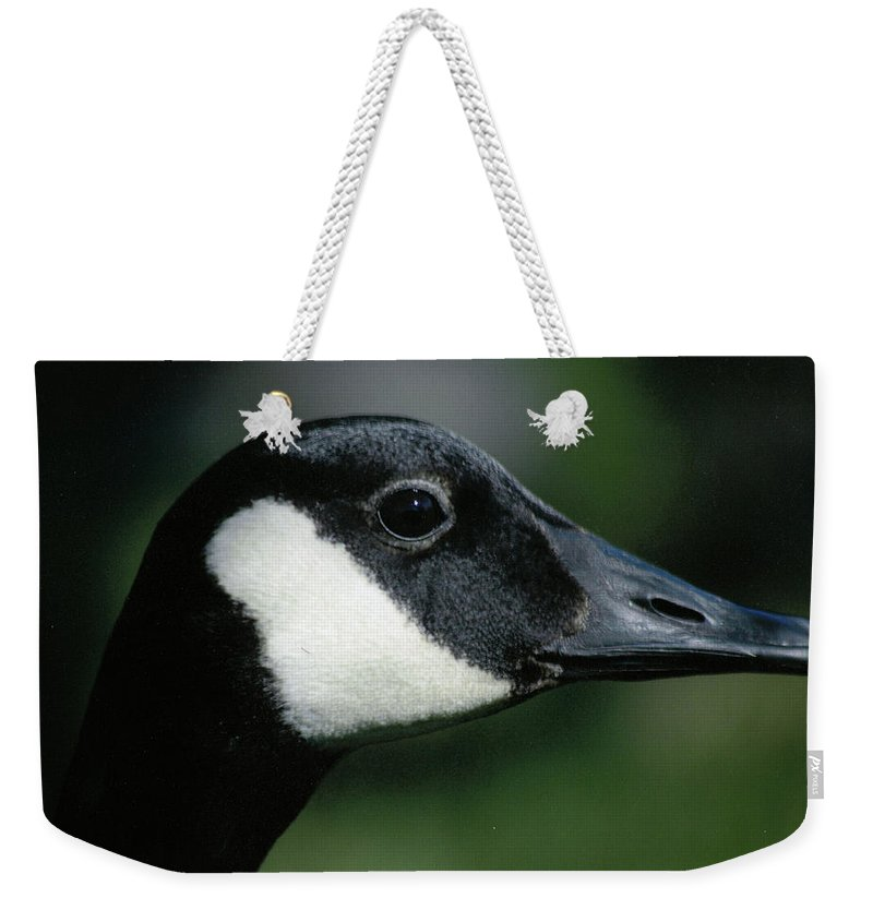 Maine Portrait Bird Wild Canadian Goose Weekender Tote Bag featuring the photograph Mercutio A Wild Goose by Sheila Price