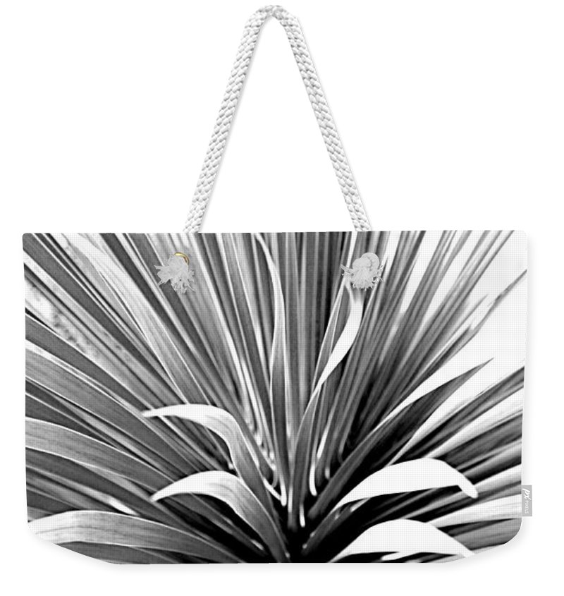 Tropic Weekender Tote Bag featuring the photograph Mesmerizing Cactus by Tina Meador