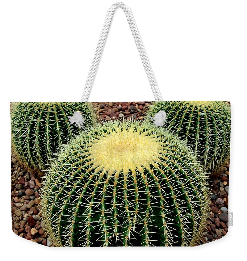 Cacti Weekender Tote Bag featuring the photograph Mickey Mouse Barrel Cactus by Donna Haggerty
