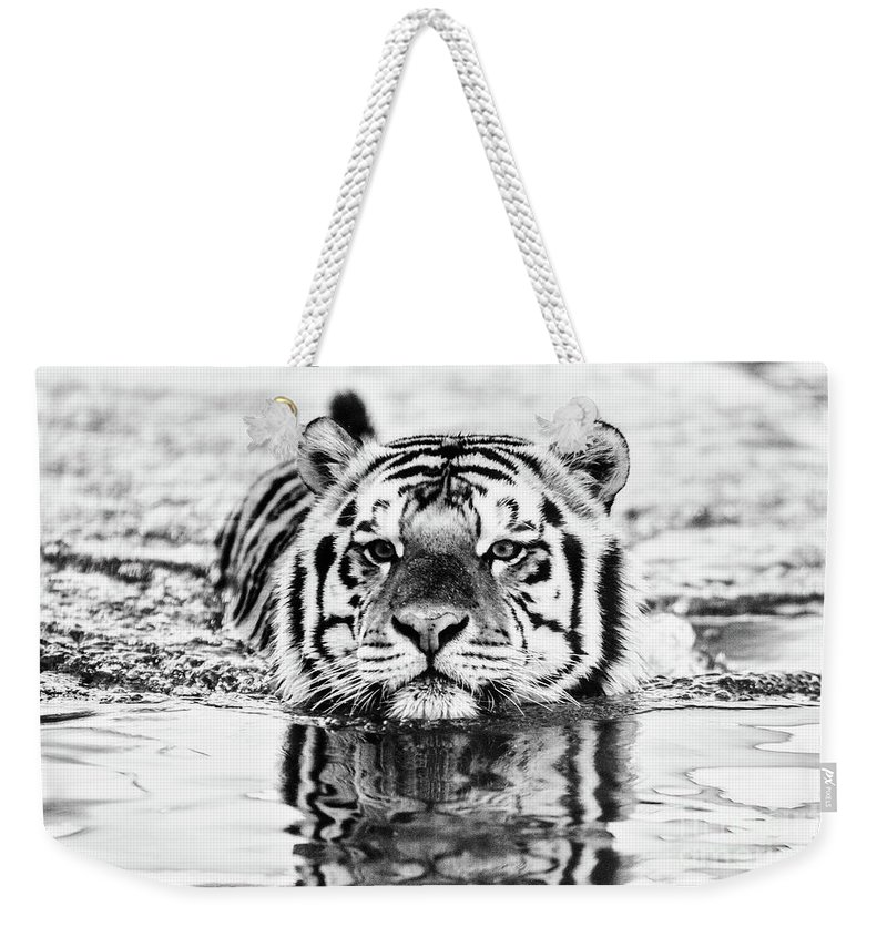 Tiger Weekender Tote Bag featuring the photograph Big Mike by Scott Pellegrin