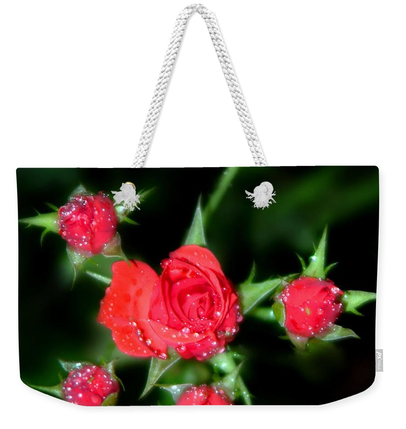 Roses Weekender Tote Bag featuring the photograph Mini Roses by Anthony Jones