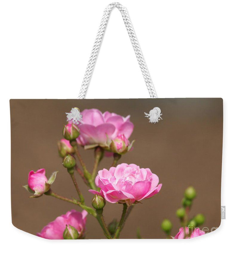 Miniature Roses Weekender Tote Bag featuring the photograph Miniature Pink Roses by Sharon Talson