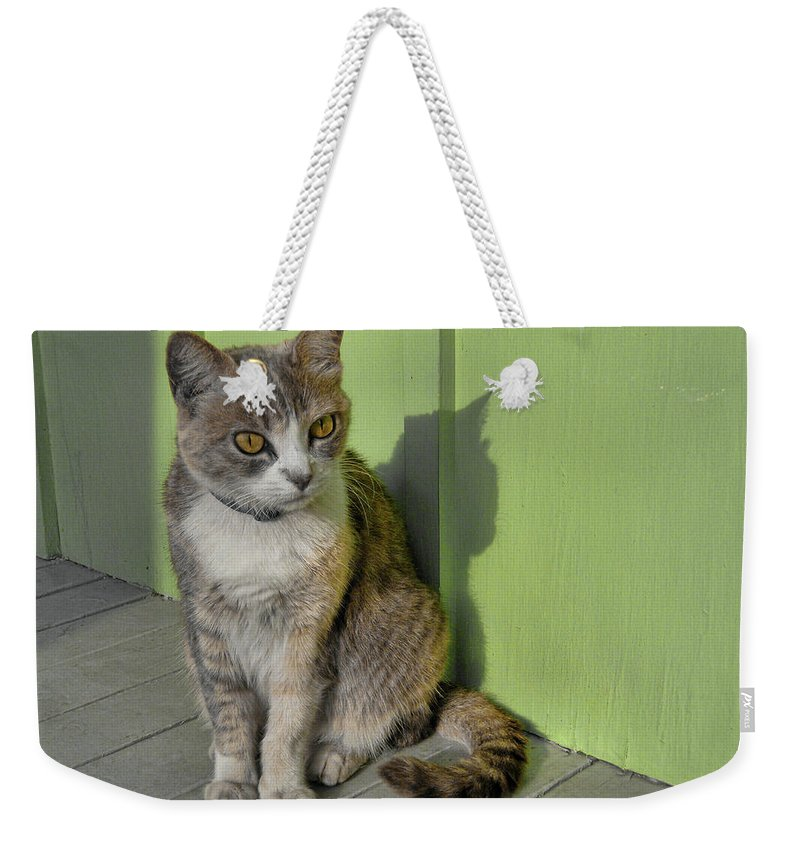 Cat Weekender Tote Bag featuring the photograph Miss Esmeralda by JAMART Photography