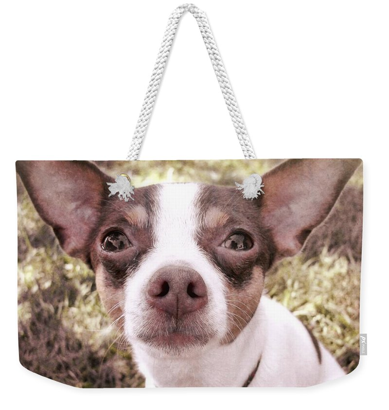 Dog Weekender Tote Bag featuring the photograph Miss Lily by JAMART Photography