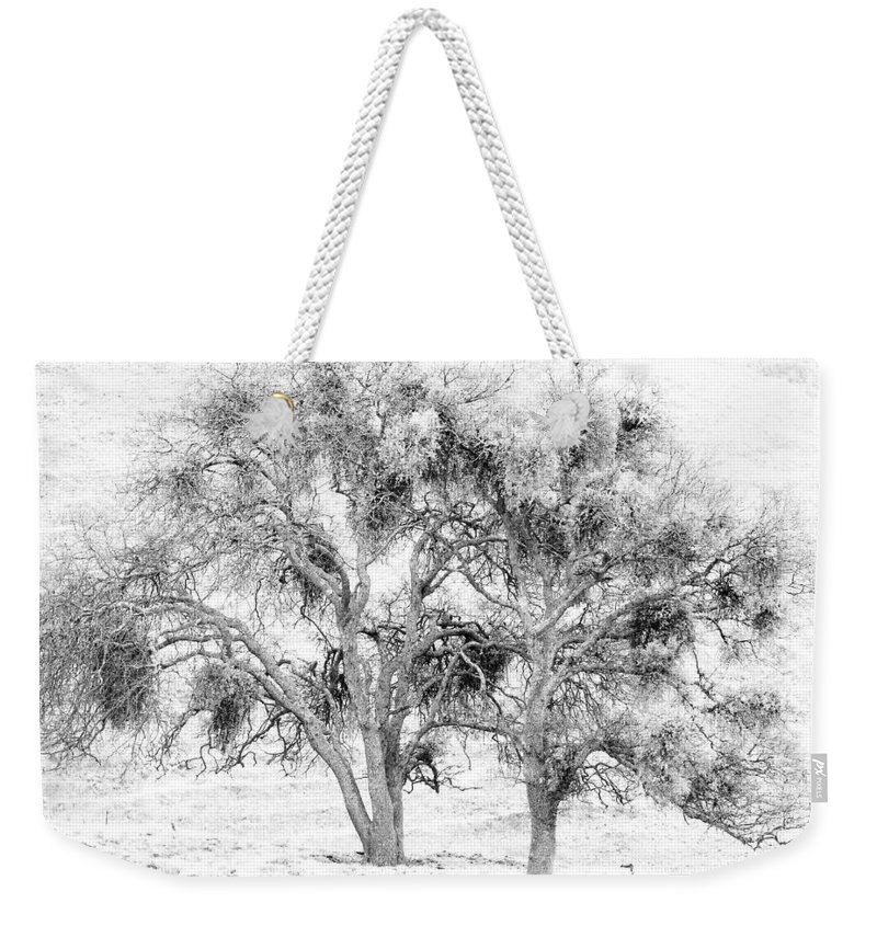 Trees Weekender Tote Bag featuring the photograph Mistletoe Tree In Black And White by Karen W Meyer