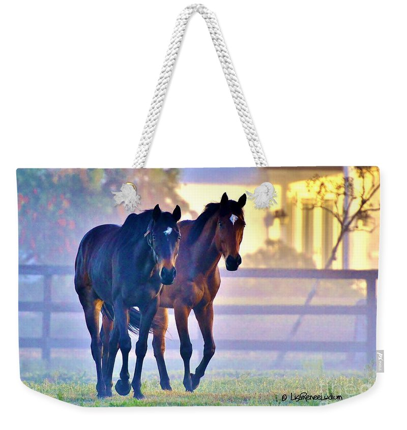Horse Weekender Tote Bag featuring the photograph Misty Morning by Lisa Renee Ludlum