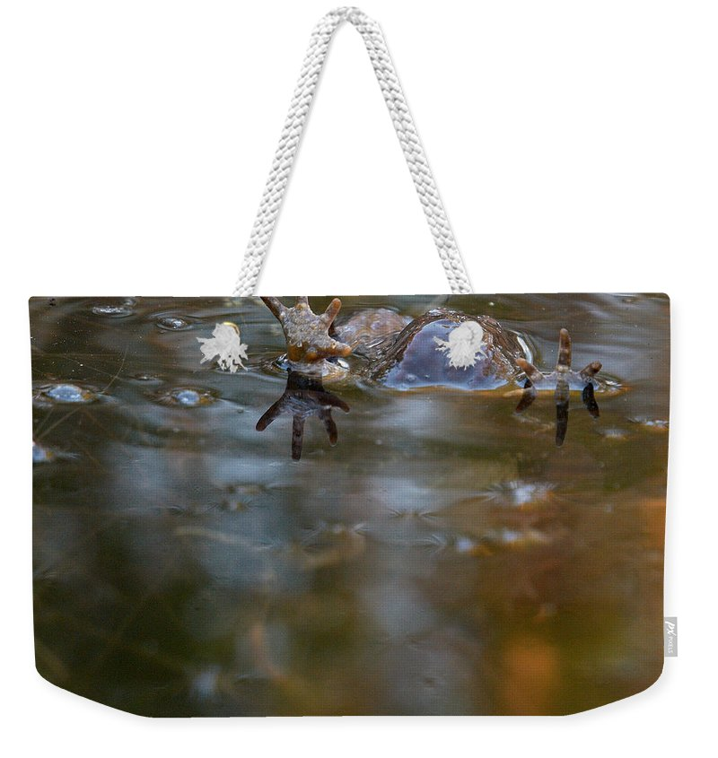 Lehtokukka Weekender Tote Bag featuring the photograph Mixed Frogs Hands Up by Jouko Lehto