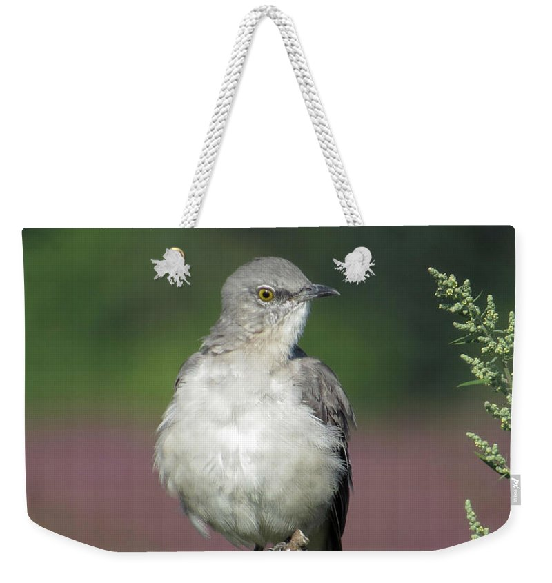 Bird Weekender Tote Bag featuring the photograph Mocking by Norman Vedder