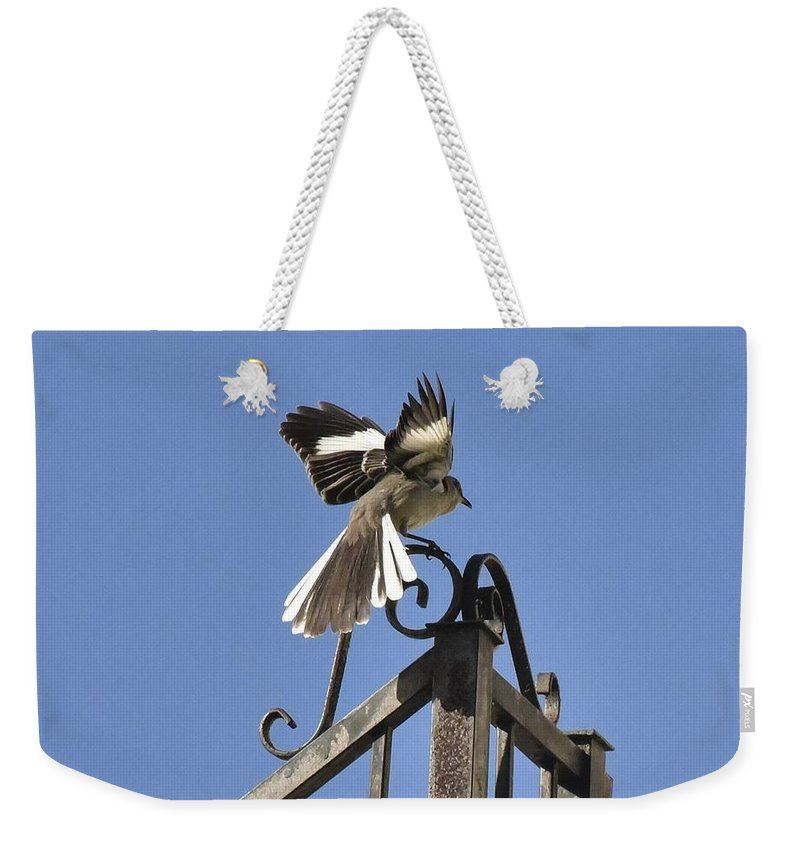 Lindabrody Weekender Tote Bag featuring the photograph Mockingbird Landing On Fence by Linda Brody