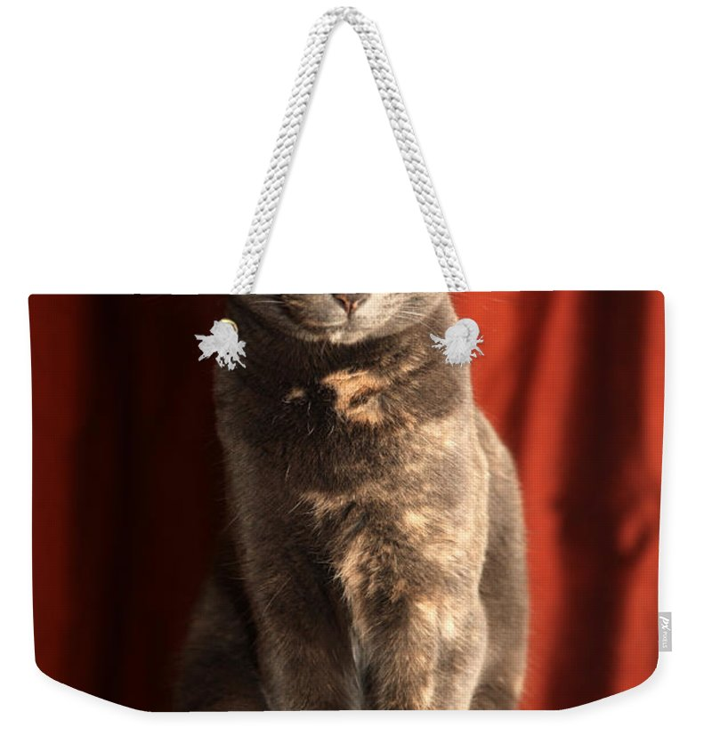 Cat Weekender Tote Bag featuring the photograph Mollie by Amanda Barcon